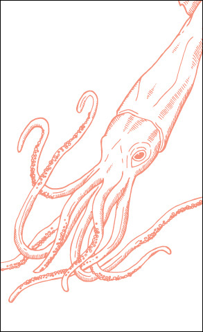 Sea Creatures: Squid Card
