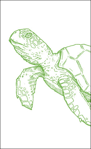 Sea Creatures: Turtle Card