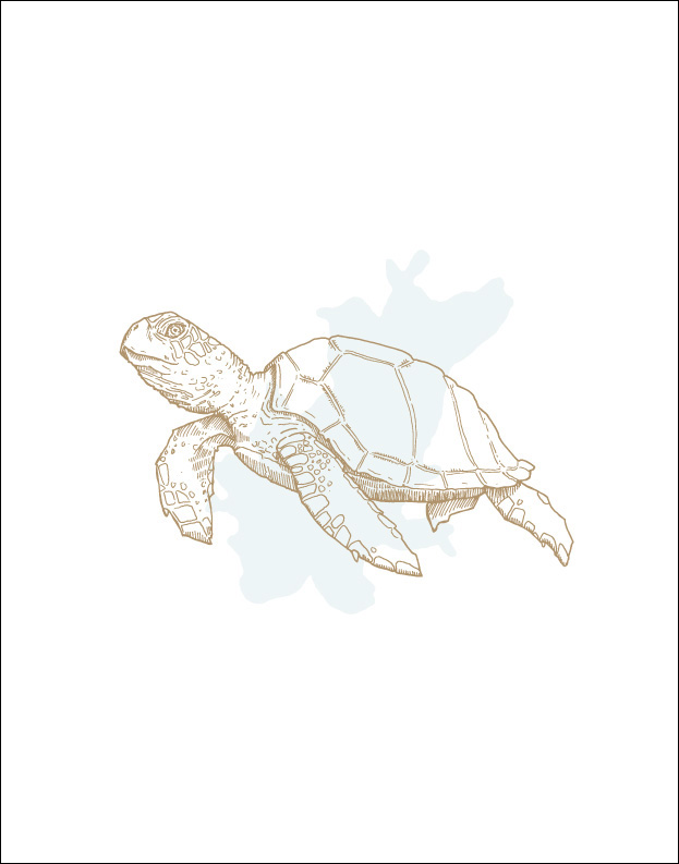 Sea Creatures: Turtle Wall Print