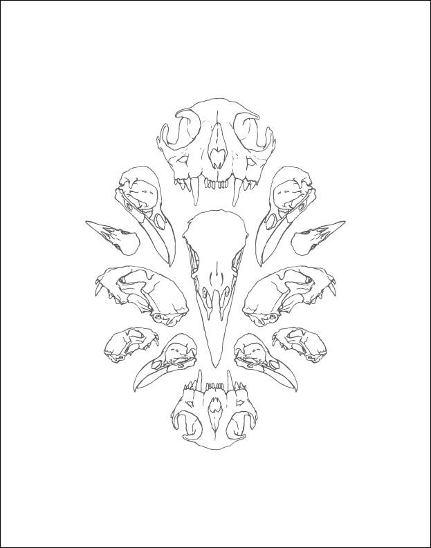 Skulls: Wall Print