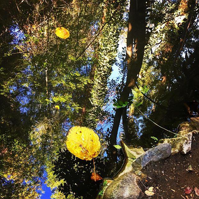 Pondlife#stilllife#skysthelimit#onreflection#ferndell #griffithpark