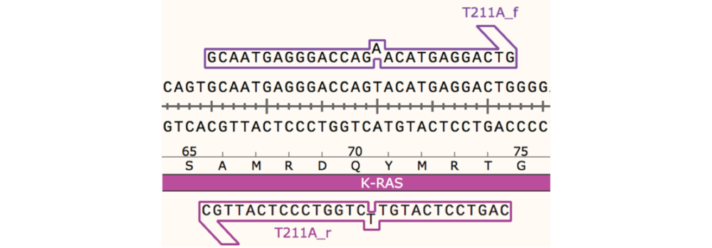 Figure 1 The Oligosynthesis Quick Instruction was performed in order to create sequencespecific mutagenesis primers complementary to the sense and antisense strands of K-RAS cDNA, incorporating a single base-pair substitution at position 211.