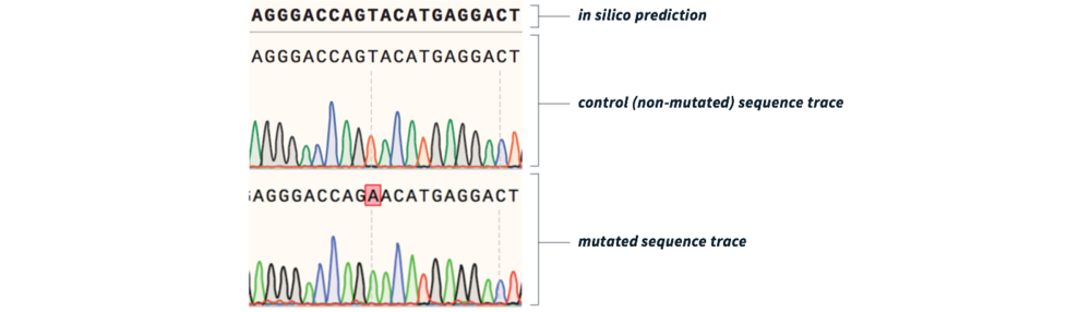 Figure 2  Sequence validation of successful mutagenesis. Top: in silico predicted human K-RAS sequence (ensembl.org). Middle: control (non-mutated) K-RAS cDNA sequence. Bottom: primer-derived mutagenesis of K-RAS (highlighted in red).