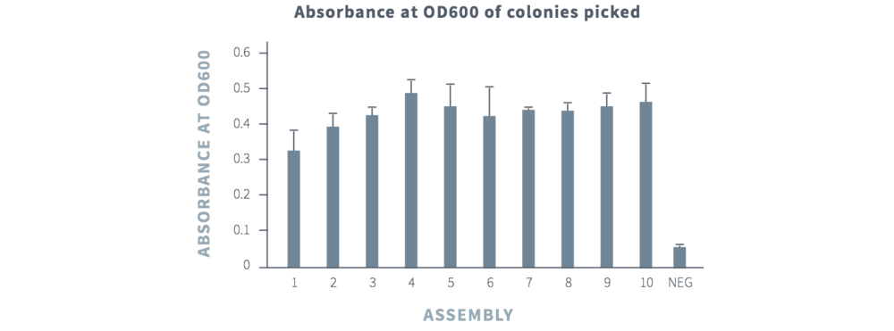 Figure 2 Representative absorbance data at 600nm for picked bacterial colonies following 16 hour outgrowth. For each assembly (1-10) along with a negative control, three colonies were picked into a 96-well flat plate containing selection media, and grown for 16 hours at 37°C. Bacterial growth was determined by an endpoint absorbance reading at 600nm.