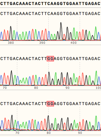 Figure 3 -Inspection of the sequence chromatograms showed that the reads taken for the successful mutants were of high quality.