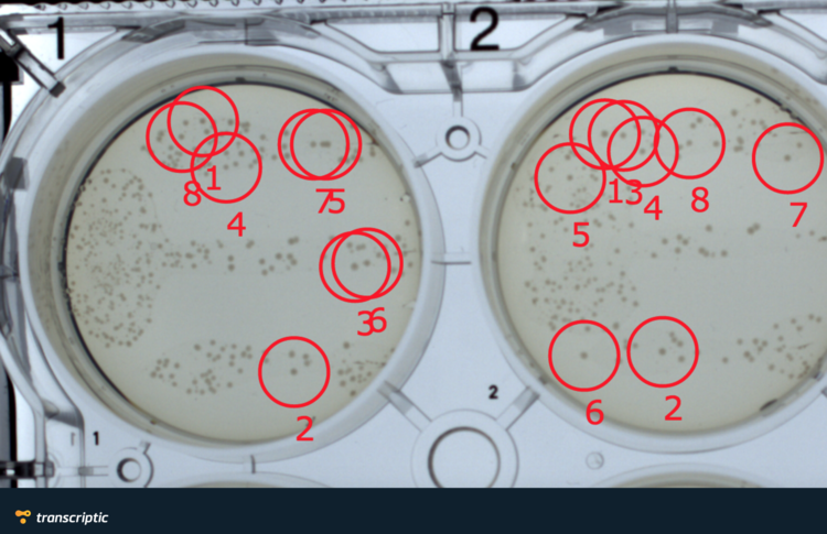 A section of the resulting plate from transforming competent bacteria with the QuikChange reaction products. Colonies circled in red were picked by the platform to be grown in liquid culture.