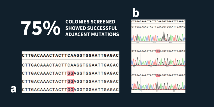 a) Top: Sequence from the source DNA. Below: Sequences from 4 picked colonies. 3 out of the 4 screened colonies were found to be positive for the target mutation. b) Clean sequences traces shown for 3 colonies.