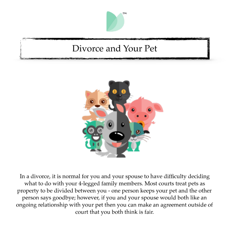 Divorce and Your Pet