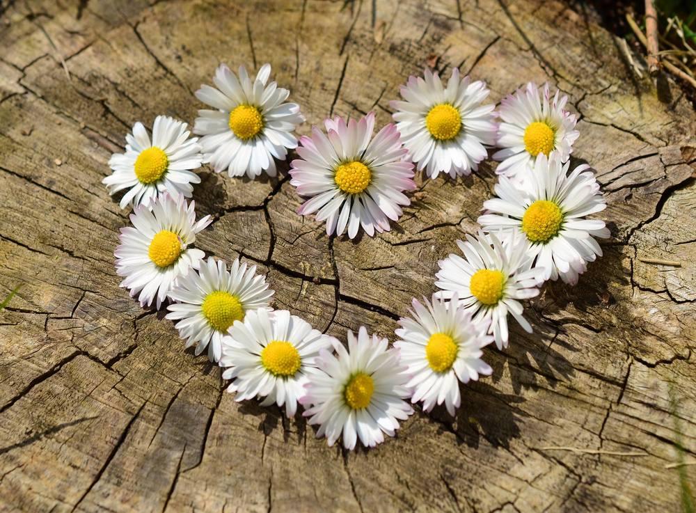 flowerheart.jpg