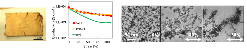 (from left to right)   Photograph of a free-standing Au NP composite.   Calculated conductivity dependence on strain for composites described by percolation theory.   TEM images of NP layers under strain of 0%, 30%, and 50%.