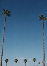 CA PALM
