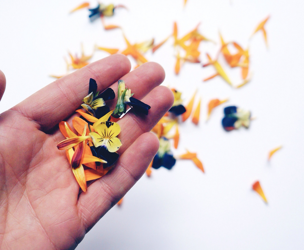 F+N | Intro to Edible Flowers