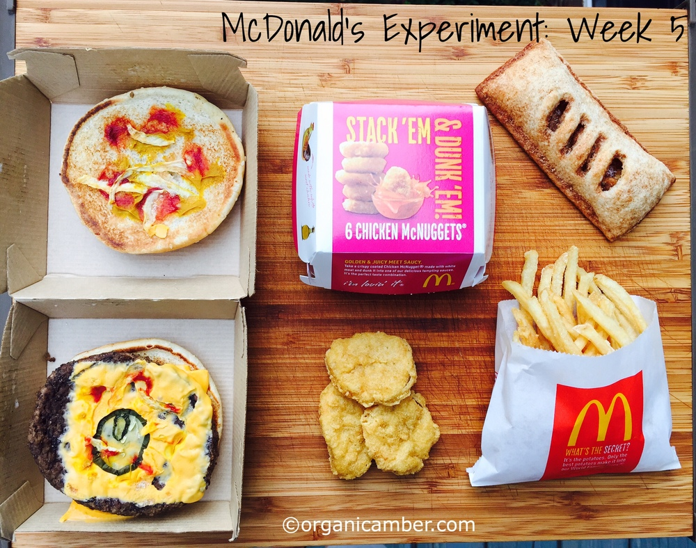 Fast Food Mold Experiment
