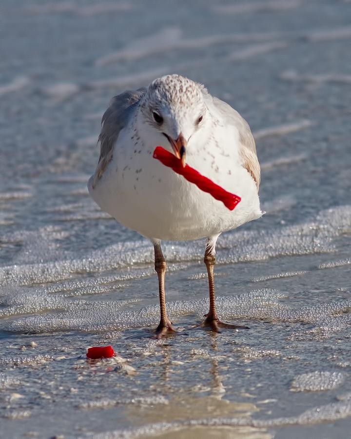 seagull_twizzler_2_sm.jpg