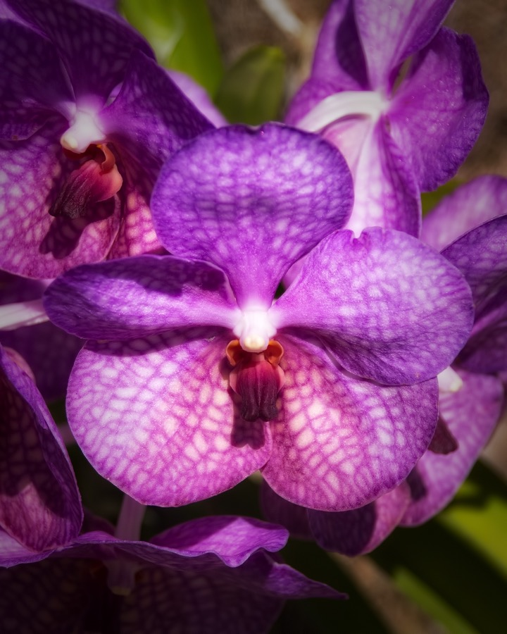 purple_orchids_sm.jpg
