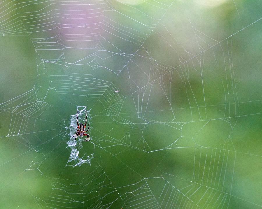spider_sm.jpg