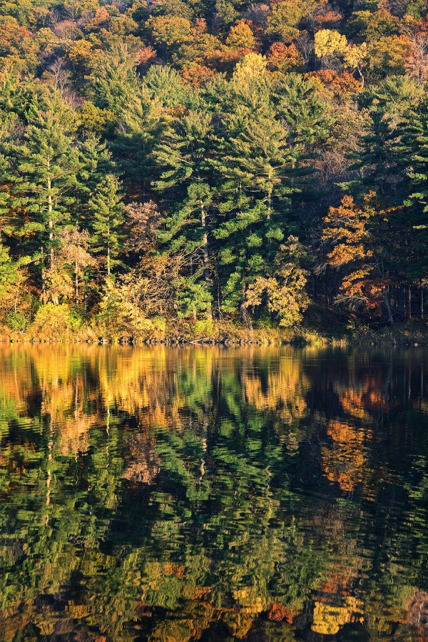 lake_dalles_trees_vert_sm.jpg