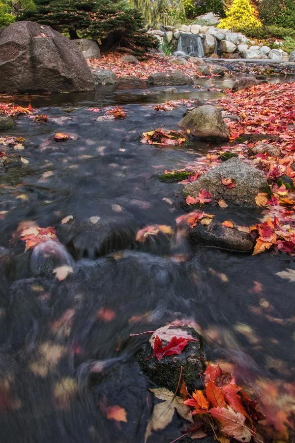 arboretum_stream_fall_sm.jpg