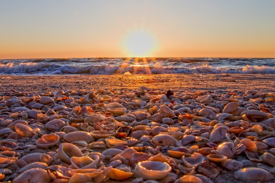 sunset_shells_sm.jpg