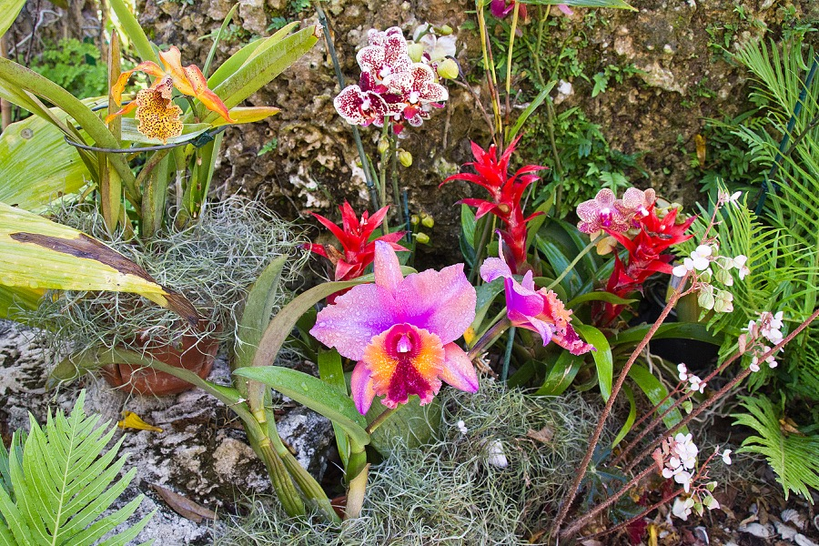 several orchids_sm.jpg