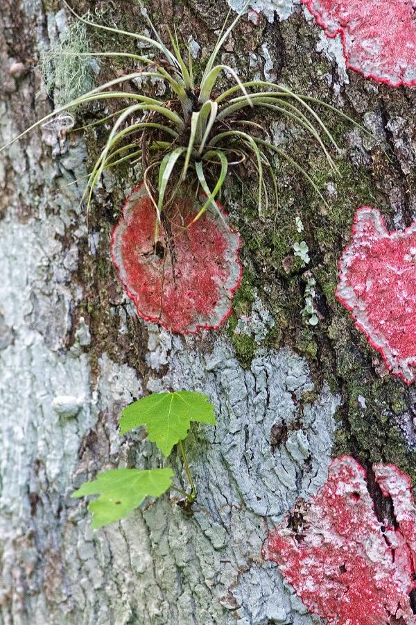 lichen&airplant_sm.jpg