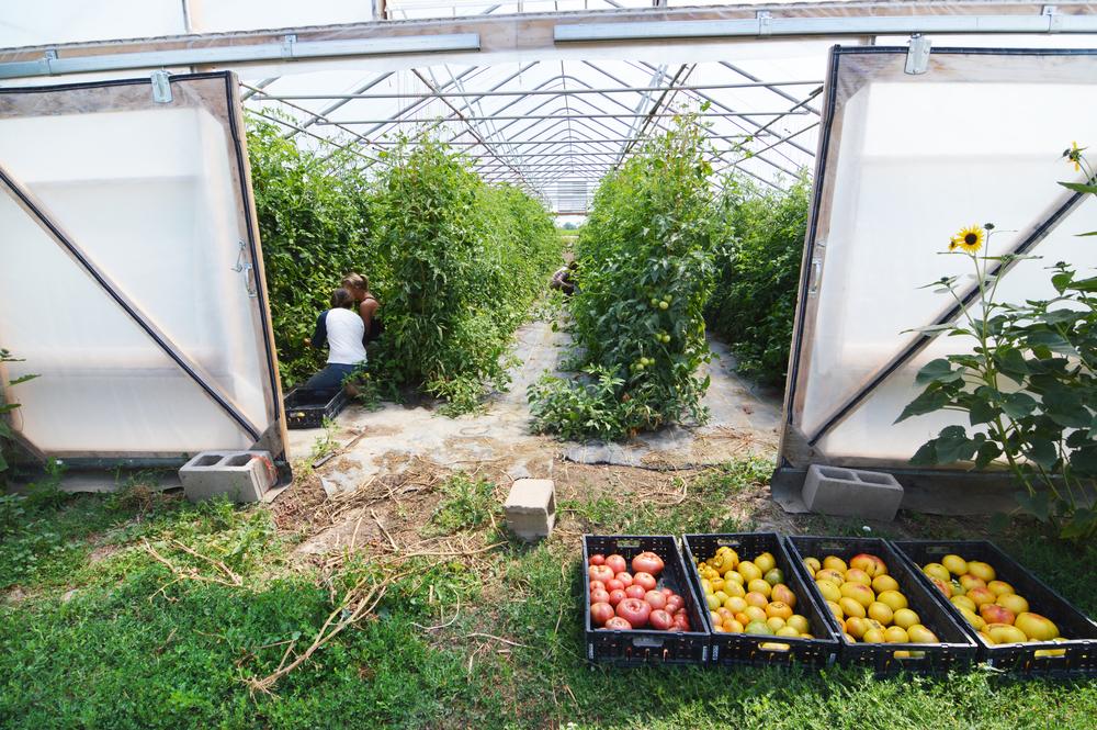 A plentiful harvest at Native Hill Farm! (Photo by Claire Burnett)