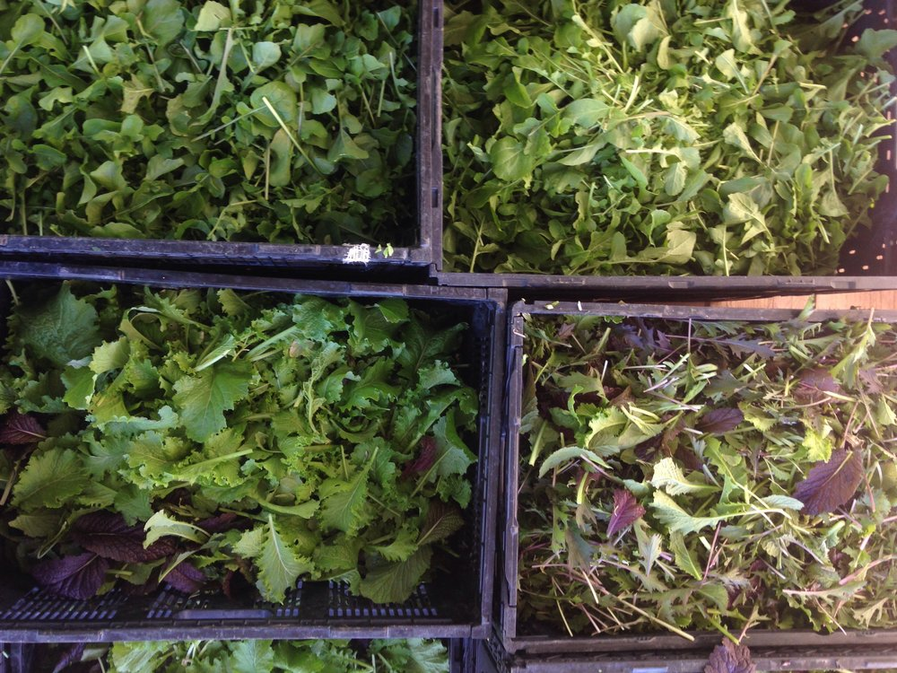 Freshly harvested spicy mix and arugula. Eat your greens!