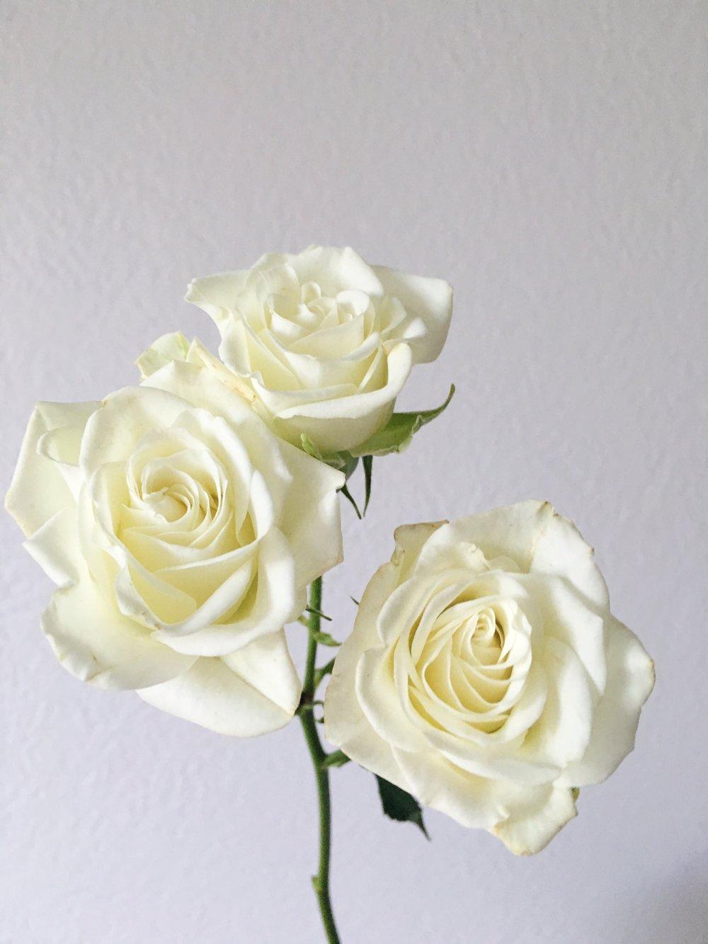 WHITE SPRAY ROSE