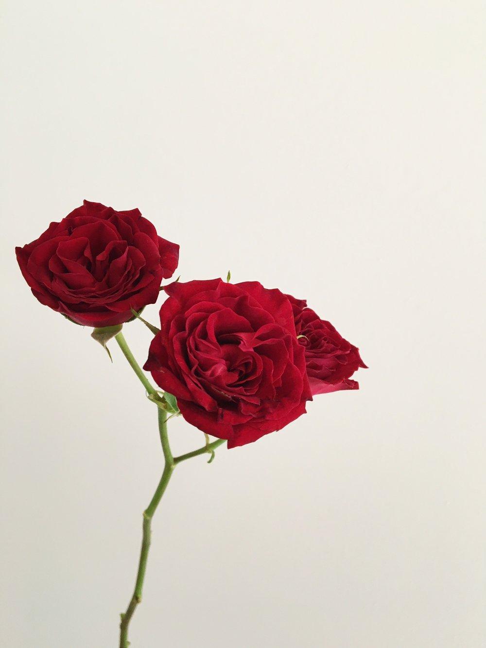 DARK RED SPRAY ROSE