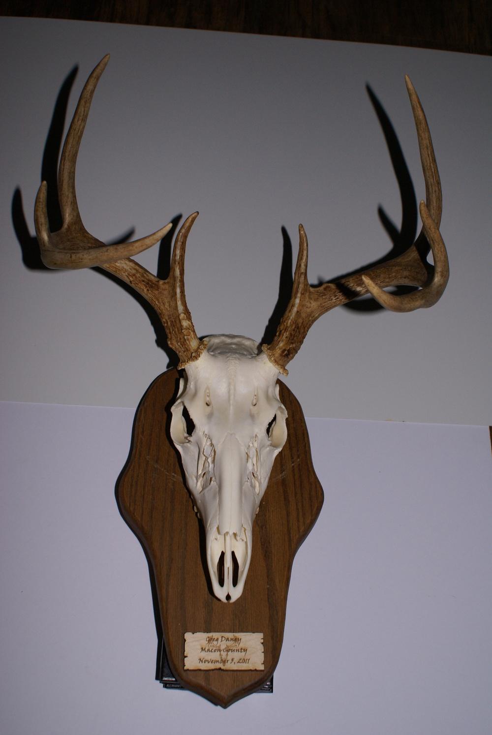 Good pic skull.JPG