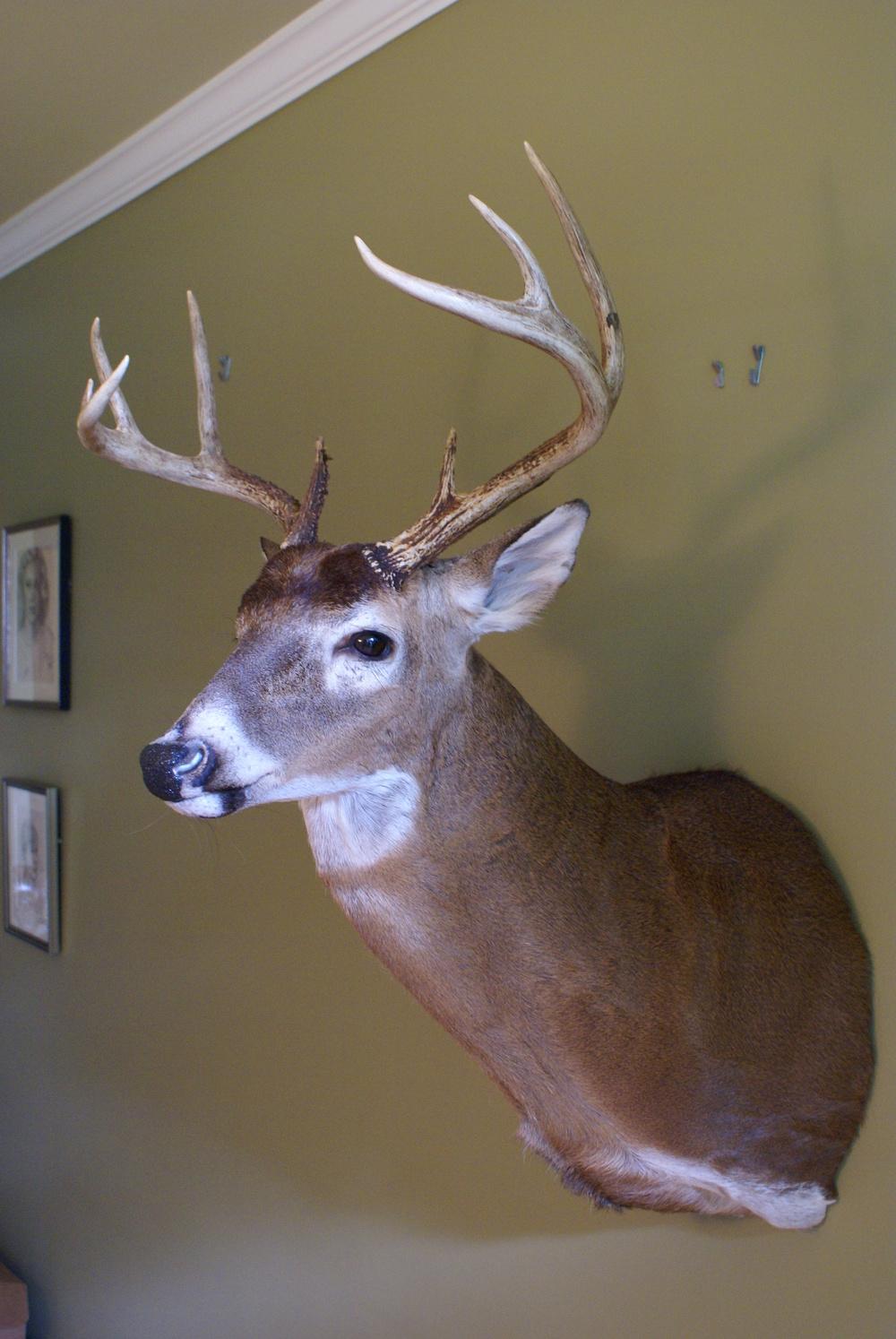 Good pic full deer.JPG