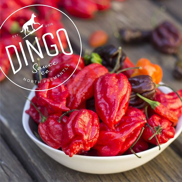 We've been helping chilli sauce legends @dingo_sauce_co put a simple 'stockists' website together as they take their first steps toward world domination! Now you know where to find the stores that stock their amazing products - www.dingosauceco.com.au Branding and photo by insomnia design. - - #insomniadesign #branding #design #chilli #hotsauce #labeldesign #packaging