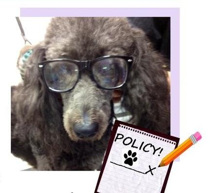 Policy+Brochure+No+CC.jpg