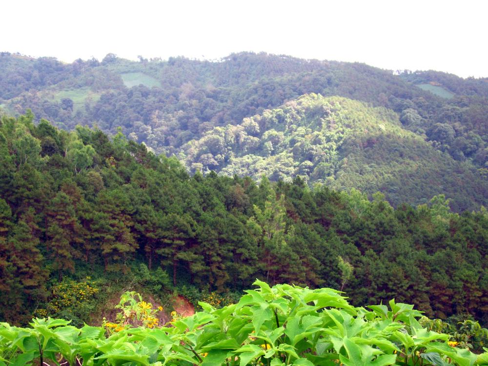tung bao tong - view2.JPG