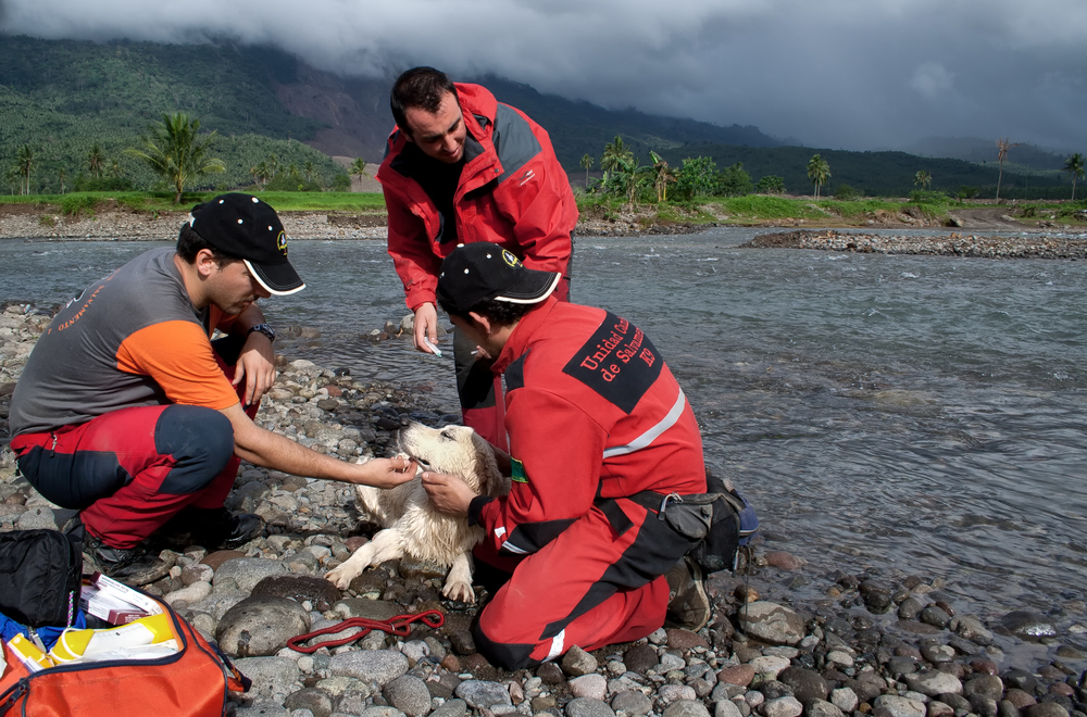 Members of a Spanish search and rescue team attend to one of their exhausted working dogs after a long day of searching (Guinsaugon, Leyte, Philippines).