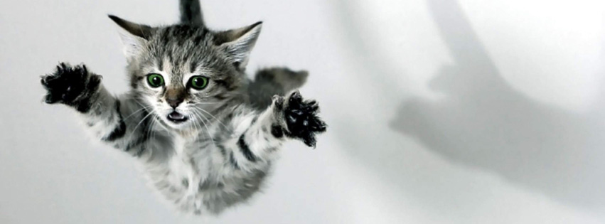 cats-jumping-facebook-cover