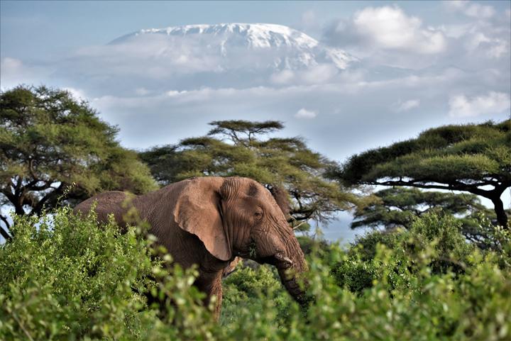 Amboseli 1.jpg
