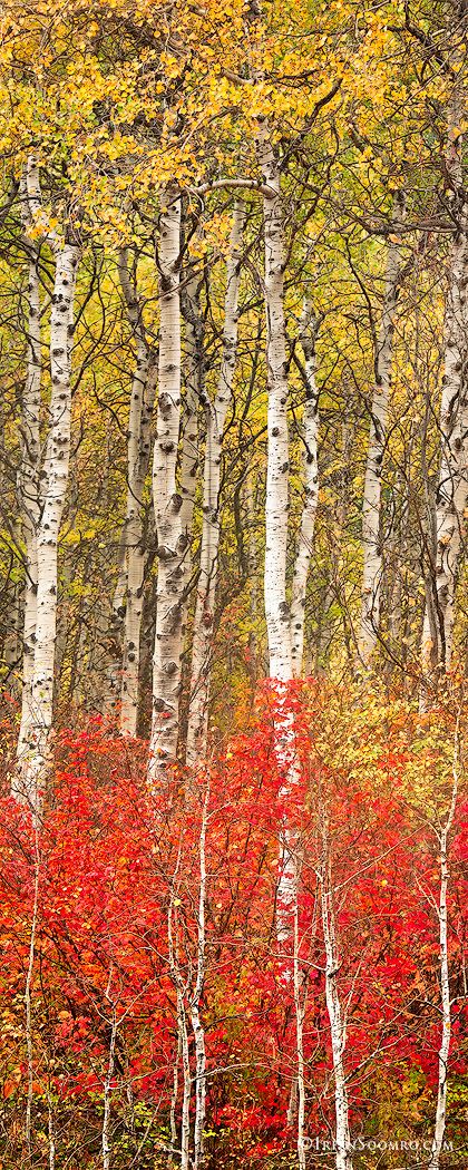 Sharpened-version-Birch-Line-II.jpg