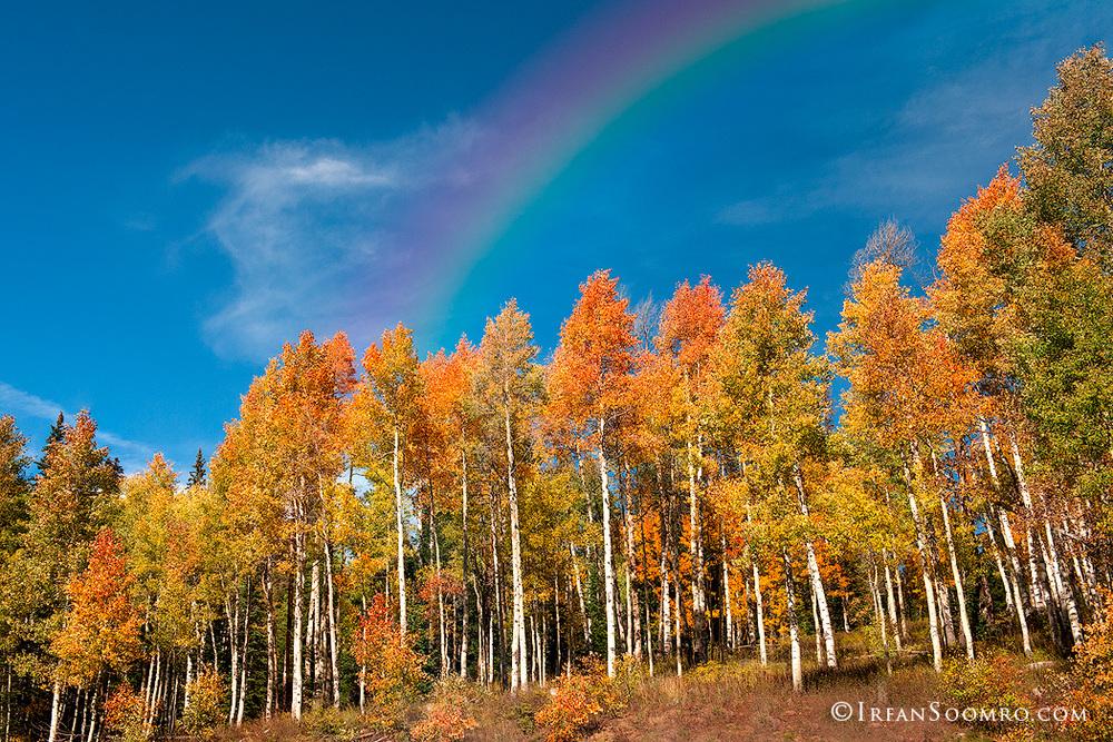 Rainbow-ove-Aspens.jpg