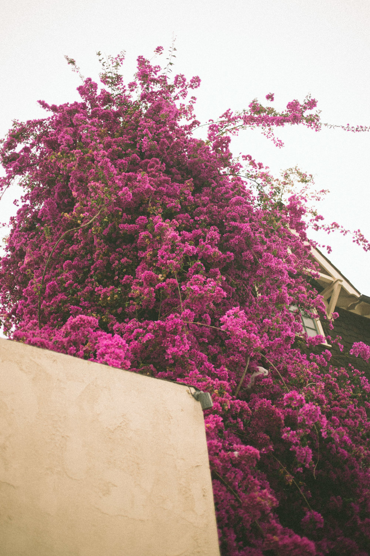 June Blog_Keeewii-32.JPG