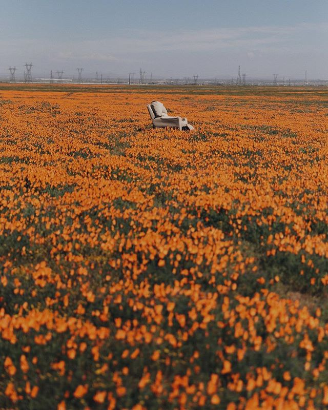 What kind of life do you think this chair lived before getting here?⁣ .⁣ .⁣ .⁣ #antelopevalley #superbloom # whatspoppin