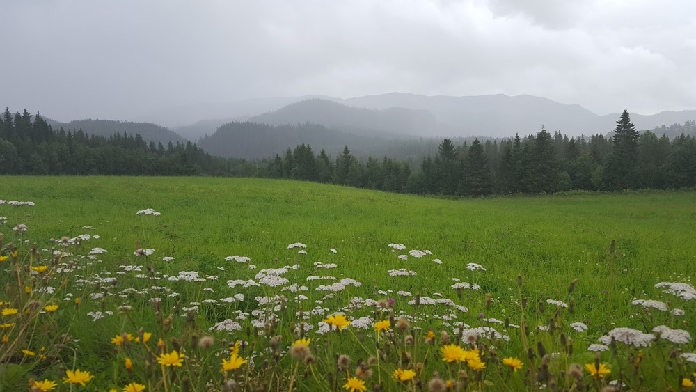 Eng og fjell i Namdalen.