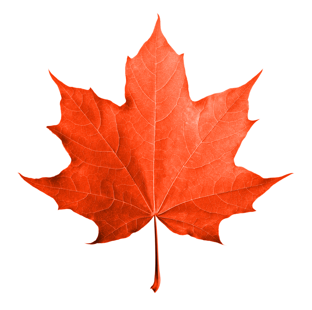 picture of a red maple leaf
