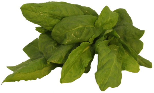 Our French Sorrel is a popular flavoring in salads, soups, sauces, and especially with fish. With its refreshing lemony taste, sorrel often substitutes for fresh lemon or arugula.