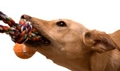 dog-pull-rope.jpg