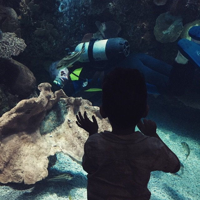 What kid doesn't love an aquarium? Safe bet for any vacation.