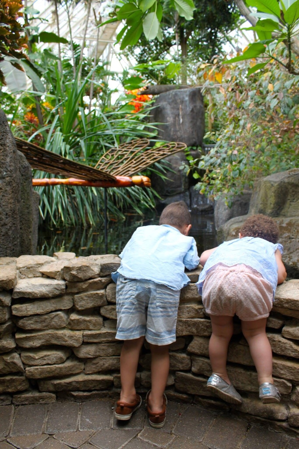 Spying on the fish in the koi pond.