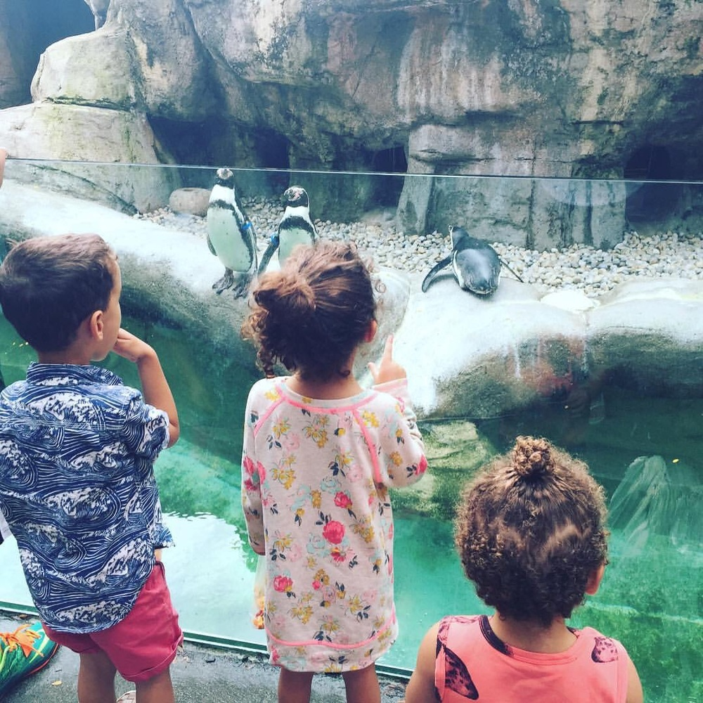 Kids looking at penguins at the Columbus Zoo in Columbus, Ohio