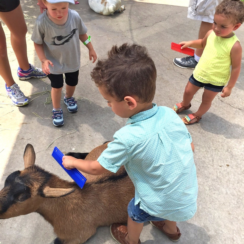 The petting zoo is a must stop for us every time we visit.