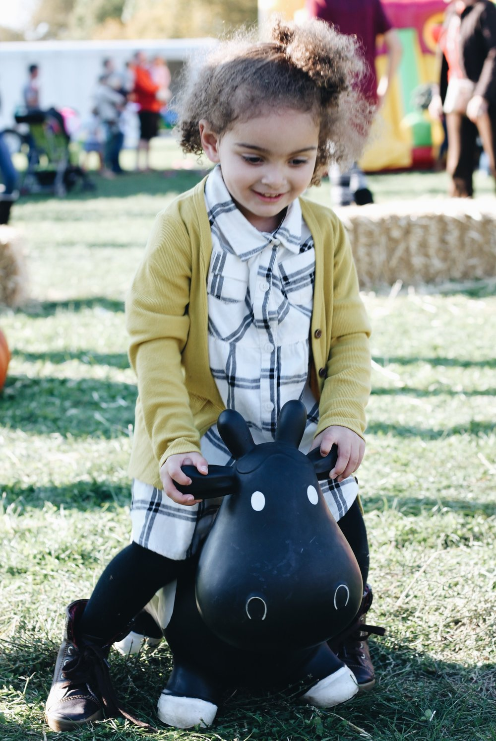 Toddler Rodeo